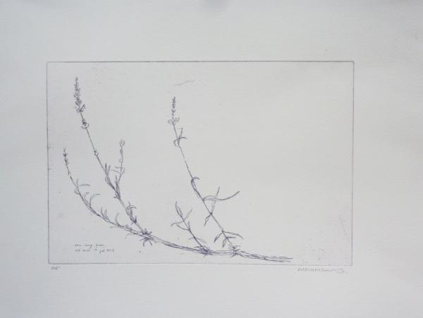 August 2013. Deeside Lavender. Etching. Nicola Chambury.